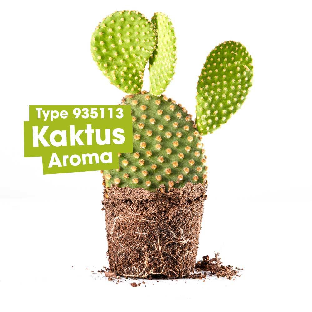 ASM® Kaktus Aroma 935113 fuer Speiseeis