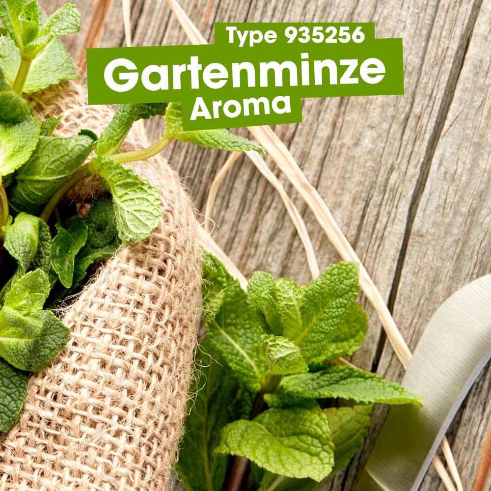 ASM® Gartenminze Aroma 93525 fuer Speiseeis