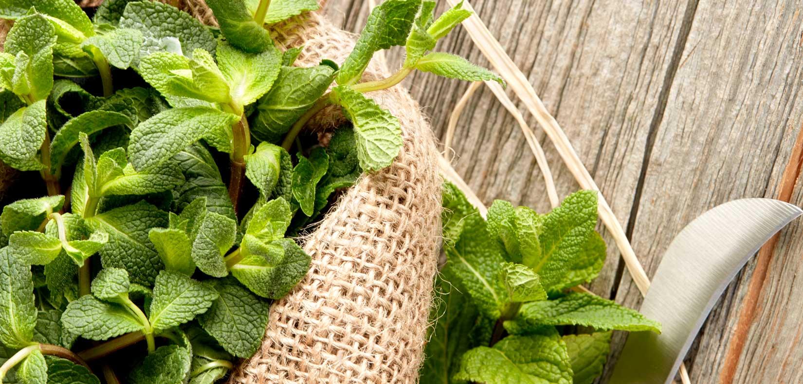 ASM® Garten Minze Aroma 935064 fuer Speiseeis